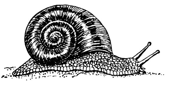 Snail_(PSF)